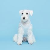 플로트 민소매 티셔츠 강아지옷 | 스카이