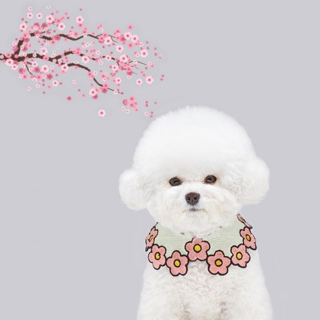 또앙 봄봄케이프 핑크